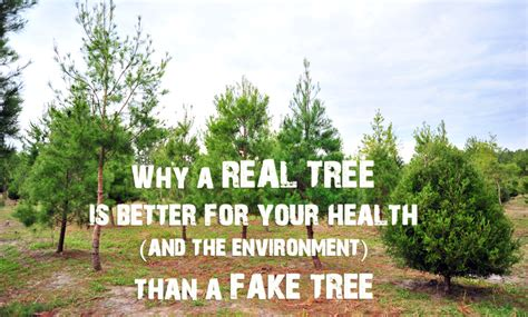 why a real christmas tree is better for your health and