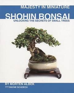 Bonsai Arten Für Anfänger : bonsai art nachgelesen ~ Sanjose-hotels-ca.com Haus und Dekorationen