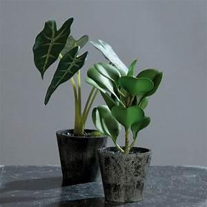 Grünpflanzen Im Topf : kunstpflanzen 2er set 20cm gr npflanzen dekopflanzen ~ Michelbontemps.com Haus und Dekorationen