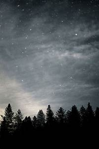 Stars Above The Forest Pictures, Photos, and Images for ...