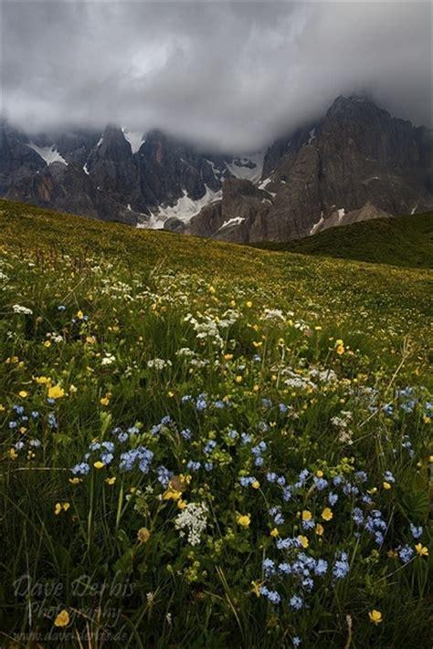 wildflowers  storm dolomites italy dave derbis