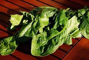 Japanischer Spinat Pflanze : spinat anbauen als wintergem se der evergreen f r selbstversorger ~ Frokenaadalensverden.com Haus und Dekorationen