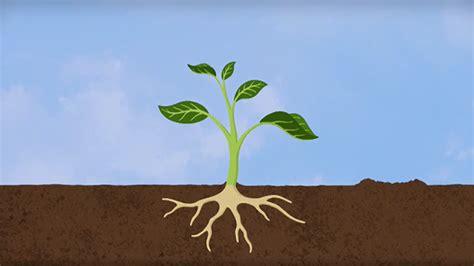was brauchen pflanzen zum wachsen was brauchen pflanzen