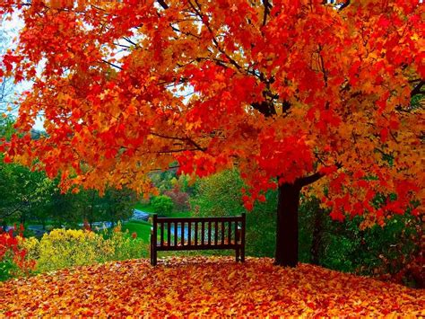 autumn wallpapers autumn wallpaper