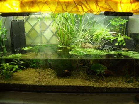 aquarium qui continu 224 l ext 233 rieur