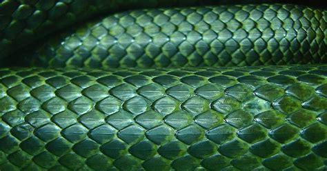 imagenes sin copyright textura de piel de serpiente