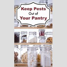 Keep Pests Out Of Your Pantry Thriftyfun