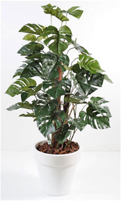 plante verte bureau mini plantes vertes