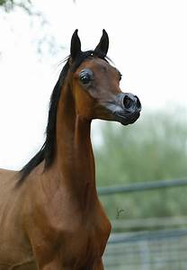Breeders Are Deforming Their Horses To Make Them 'Prettier ...