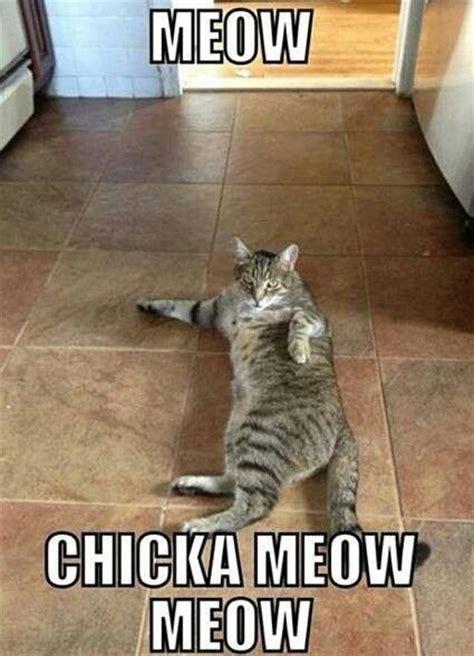 Cat Meow Meme - meow chicka meow meow cat meme i m a cat lady pinterest cat memes sexy cat and meme