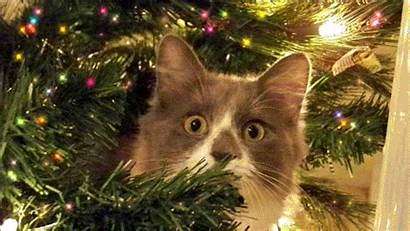 Christmas Merry Animated Gifs Greetings Cats Happy