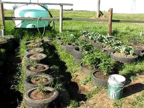 tire garden  weeks  planting youtube