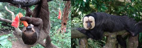 singapore animals zoo forest fragile roaming wildlife close