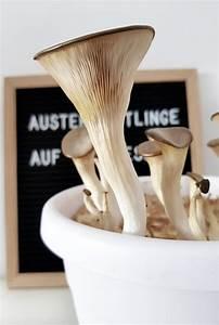 Austernpilze Selber Züchten : austernpilze auf kaffeesatz diy gr neliebe ~ Orissabook.com Haus und Dekorationen