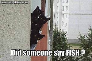 Black Cats with Funny Captions   Funny Black Cats Fish ...