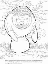 Manatee Coloring Algae Manati Kleurplaten Adult Dover Publications Doverpublications Zee Sheets Template Mandala Designlooter Browse Complete Colorear sketch template