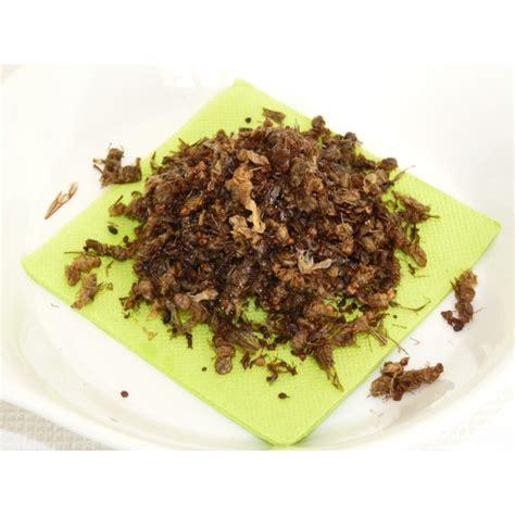 fourmis cuisine fourmis reines insectes comestibles thailande insectes à