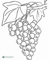 Coloring Grapes Pages Printable sketch template