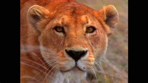 World Animal Adventure, Part 3  Animal Videos For Kids
