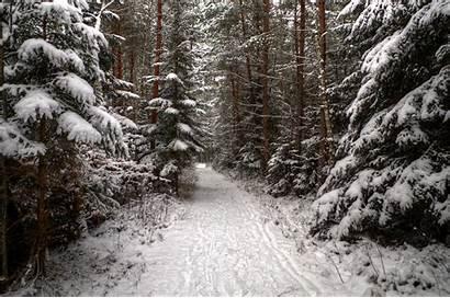 Winter Snow Forest Path Background Trees Burtn