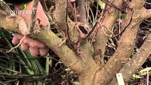 Comment Tailler Un Pommier : la taille du pommier jardinerie truffaut tv youtube ~ Dode.kayakingforconservation.com Idées de Décoration