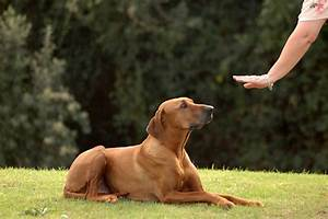 obedience services With dog behaviorist