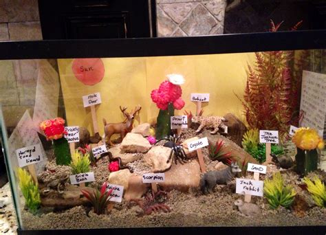 Desert Ecosystem 4th Grade Science Project Sonoran