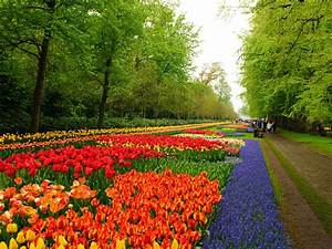 Lisse Travel HD Wallpapers