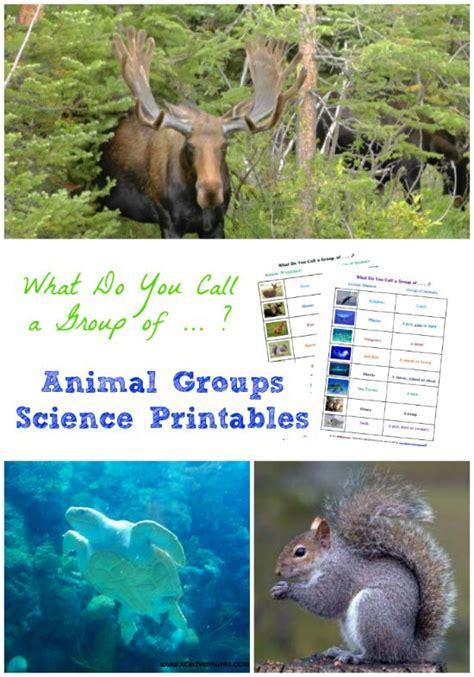 groups  animals science printables  kids