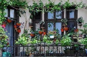 Plantes Grimpantes Pot Pour Terrasse : des plantes grimpantes pour balcon et terrasse on est ~ Premium-room.com Idées de Décoration