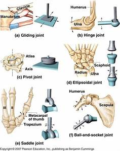 Iv  Classify Synovial Joint Based On Type Of Movement