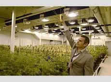 Native Roots' Rhett Jordan, Josh Ginsberg build marijuana