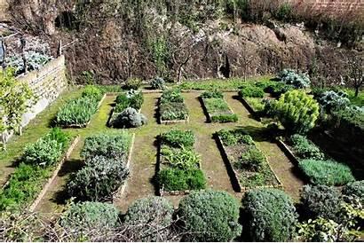 Medieval Garden Inconnection Vasanello Herb