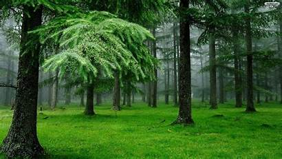 Forest Natural Background 4k Desktop Wallpapers Trees