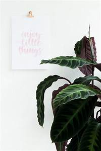 Bilder Aufhängen Ohne Bohren : bilder aufh ngen ohne bohren und ein gratis poster zum ausdrucken ~ Udekor.club Haus und Dekorationen