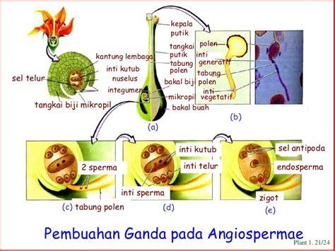 anatomi bunga kelenjar