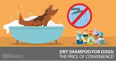 Shampoo Dogs Dry Dog Safe Convenient