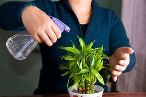 Entretien Plante Verte : entretien du dracaena gamm vert ~ Medecine-chirurgie-esthetiques.com Avis de Voitures