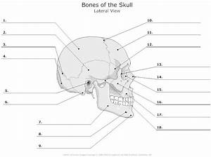 15 Best Images Of Human Anatomy Physiology Worksheets