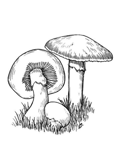 disegni  funghi da colorare pianetabambiniit