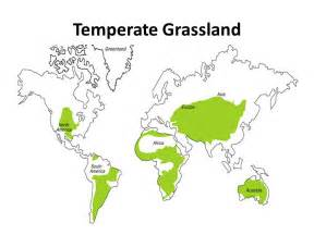 temperate forest ppt