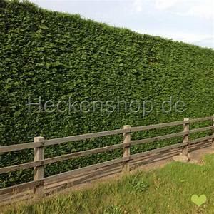 Hecke Schnell Wachsend : leyland zypresse 80 100cm im topf gewachsen ~ Whattoseeinmadrid.com Haus und Dekorationen