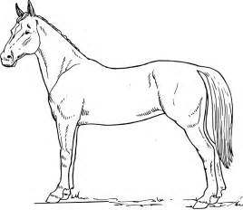 HD wallpapers coloriage cheval a imprimer