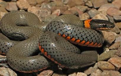 Snake Anaconda Python Wallpapers 1080 Background Wallpapers13