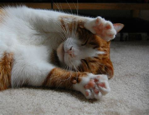 funny cats part   pics  gifs amazing creatures