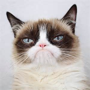 grumpy cats grumpy cat on quot https t co vksehakahe quot