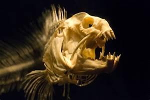 Image Gallery eel skeleton