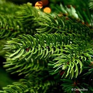 Achat Sapin De Noel Artificiel : sapin artificiel sherwood de luxe 185 cm vert triumph tree ~ Melissatoandfro.com Idées de Décoration