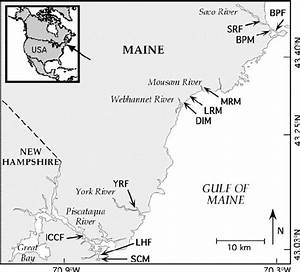 Locations Of Fringing Salt Marsh And Meadow Salt Marsh