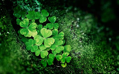 lucky st pattys day backgrounds